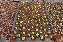Groeiende Organische plantaardige landbouwbedrijven royalty-vrije stock afbeelding