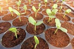 Groeiende Organische plantaardige landbouwbedrijven royalty-vrije stock foto's