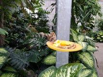 Groeiende vlinder Stock Foto's