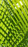 Groen #2 royalty-vrije stock foto