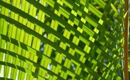 Groen #3 royalty-vrije stock afbeelding