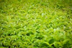 groen Stock Fotografie