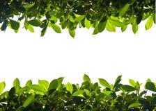 Groen aardgebladerte boven en beneden grens Royalty-vrije Stock Afbeelding