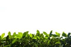 Groen aardgebladerte onderaan grens Stock Afbeelding