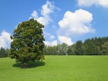 Groen aardlandschap Royalty-vrije Stock Foto's