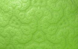 Groen abstract naadloos patroon royalty-vrije illustratie