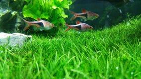 Groen Aquarium Royalty-vrije Stock Afbeeldingen