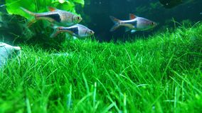 Groen Aquarium Stock Afbeelding