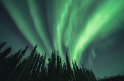 Groen aurora borealis die omhoog boven gesilhouetteerde bomen waaien Royalty-vrije Stock Foto's