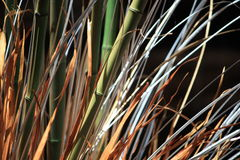 Groen bamboe Stock Foto's