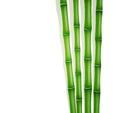 Groen bamboe Royalty-vrije Stock Afbeelding