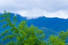Groen bamboe in aard Stock Afbeelding