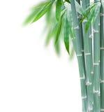 Groen bamboe met bladeren Stock Afbeeldingen