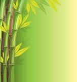 Groen bamboe op groene achtergrond Stock Afbeelding