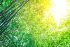 Groen bamboebos Stock Afbeeldingen