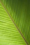 Groen banaanblad Stock Afbeeldingen