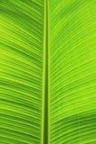 Groen banaanblad. Stock Fotografie