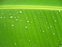 Groen banaanblad. Royalty-vrije Stock Foto's