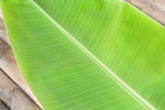 Groen banaanblad Royalty-vrije Stock Foto's