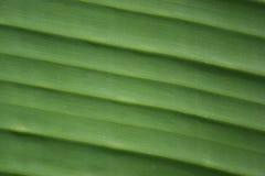 Groen banaanblad Royalty-vrije Stock Fotografie