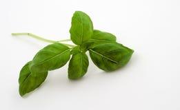 Groen basilicum Royalty-vrije Stock Foto