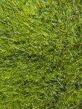 Groen besnoeiingsgras in de lente stock foto