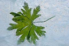 Groen bevroren blad Royalty-vrije Stock Afbeeldingen