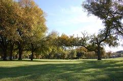 Groen bij openbaar park Royalty-vrije Stock Afbeeldingen
