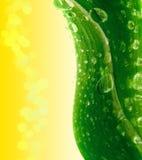 Groen blad. royalty-vrije stock afbeeldingen