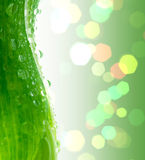 Groen blad. Stock Afbeeldingen