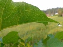 groen blad royalty-vrije stock foto