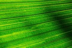 Groen blad 2 Royalty-vrije Stock Afbeeldingen
