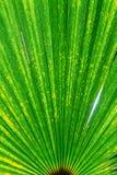 Groen blad 4 Royalty-vrije Stock Afbeeldingen