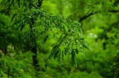 groen blad Stock Foto's