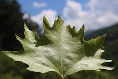 Groen blad in Aard Royalty-vrije Stock Fotografie
