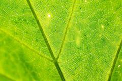 Groen blad als achtergrond Royalty-vrije Stock Afbeeldingen