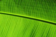 Groen blad als achtergrond Stock Foto