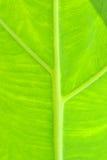 Groen blad als achtergrond Stock Afbeelding