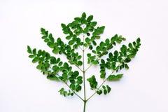 Groen blad dat op witte achtergrond wordt geïsoleerdr stock fotografie