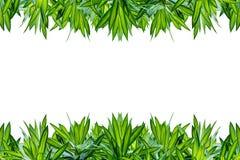 Groen blad dat op witte achtergrond wordt geïsoleerdr stock foto