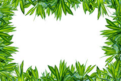 Groen blad dat op witte achtergrond wordt geïsoleerdr royalty-vrije stock afbeelding