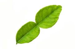 Groen blad dat op witte achtergrond wordt geïsoleerdr Stock Foto's
