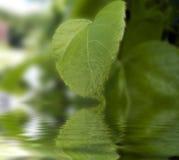 Groen blad dat water wordt overdacht Royalty-vrije Stock Afbeelding