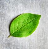 Groen blad die op gekrast metaal liggen stock foto's