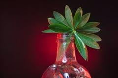 Groen blad in een fles Stock Foto's