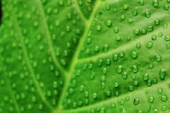 Groen blad en bos Royalty-vrije Stock Afbeeldingen