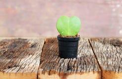 Groen blad en rode hartvorm in bloempot Stock Foto