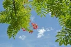 Groen blad en weinig bloem Stock Fotografie
