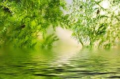 Groen blad, het bokeheffect, het ochtendzonlicht en de waterbezinning Stock Afbeeldingen