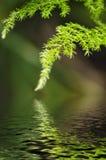 Groen blad, het bokeheffect, het ochtendzonlicht en de waterbezinning Royalty-vrije Stock Foto's